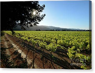 At The Vineyard Canvas Print