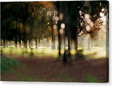Canvas Print featuring the photograph At The Yarkon Park Tel Aviv by Dubi Roman