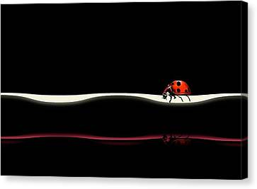 Ladybird Canvas Print - At Your Pace by Natalia Baras