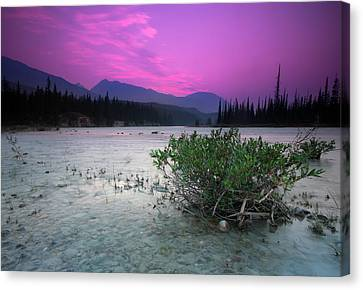 Athabasca River Bush At Sunset Canvas Print by Cale Best