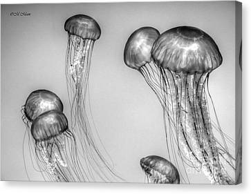 Atlantic Jellyfish - California Monterey Bay Aquarium Canvas Print