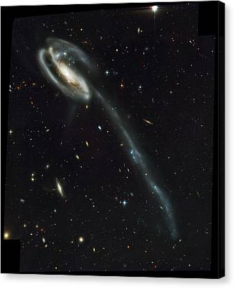 Atlas Of Peculiar Galaxies Canvas Print by Celestial Images