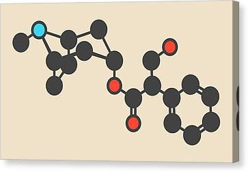 Atropine Drug Molecule Canvas Print