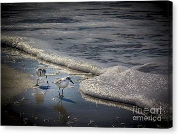 Sea Birds Canvas Print - Attack Of The Sea Foam by Marvin Spates