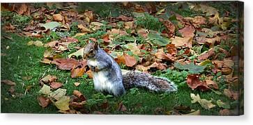 Squirrel Canvas Print - Attentive Squirrel by Gina Dsgn