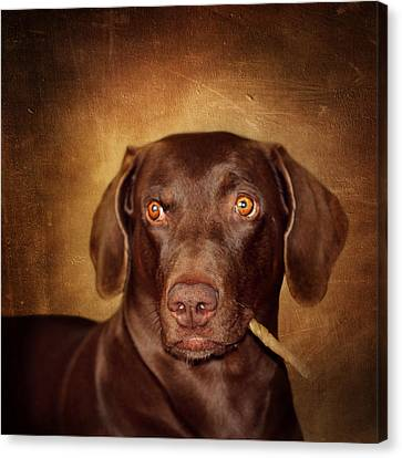 Attila The King Of Dogs Canvas Print