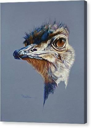 Attitude Aftican Ostrich Canvas Print
