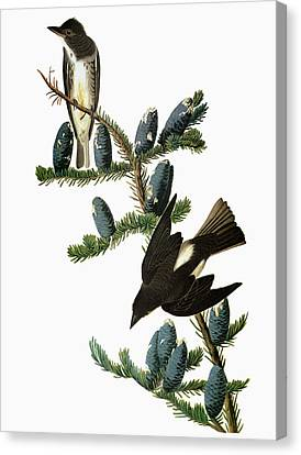Audubon Flycatcher Canvas Print by Granger