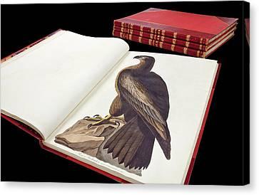 Audubon's The Birds Of America Canvas Print
