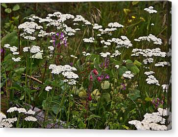 Canvas Print featuring the photograph August Flowers by Jeremy Rhoades