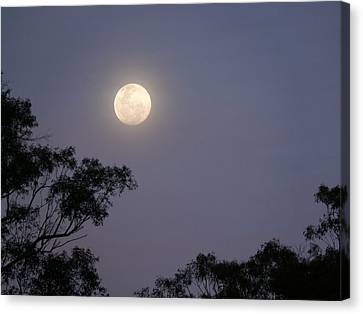 Canvas Print featuring the photograph August Moon by Evelyn Tambour