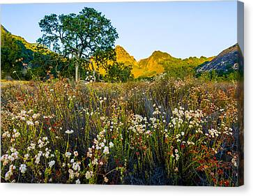 August Sunrise In Malibu Creek State Park Canvas Print by Joe Doherty