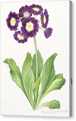 Auricula Canvas Print by Sally Crosthwaite