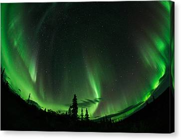 Aurora Embrace Canvas Print by Roger Clifford
