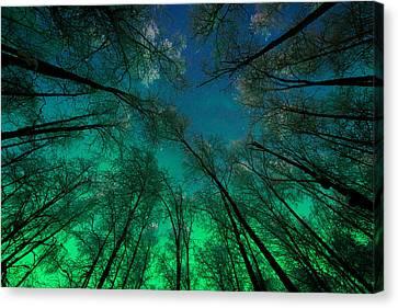 Aurora Glow Through The Birches Canvas Print by Roger Clifford