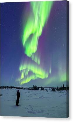 Aurora Watcher With Twilight Curtains Canvas Print by Alan Dyer