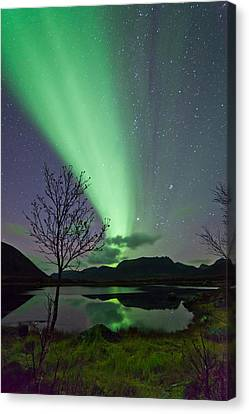 Auroras And Tree Canvas Print