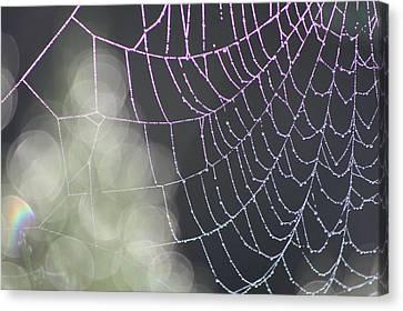 Canvas Print featuring the photograph Aurora's Web by Cathie Douglas