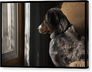 Aussie On Watch Canvas Print by Ron Roberts