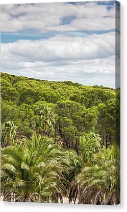 Australia, Barossa Valley Canvas Print