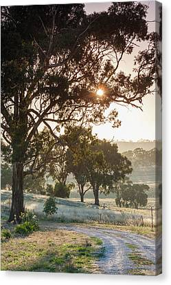 Clare Canvas Print - Australia, Clare Valley, Clare, Gum by Walter Bibikow