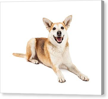 Cattle Dog Canvas Print - Australian Cattle And Shiba Inu Mix Dog Laying by Susan Schmitz