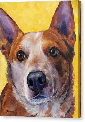 Australian Cattle Dog Red Heeler On Yellow Canvas Print by Dottie Dracos