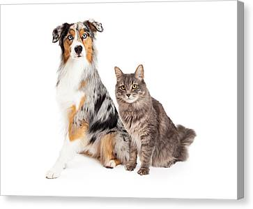 Australian Shepherd Dog And Tabby Cat Canvas Print by Susan Schmitz