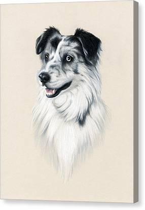 Working Dog Canvas Print - Australian Shepherd by Heather Mitchell