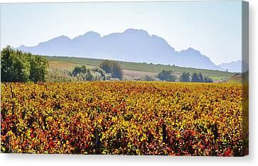 Autum Wine Field Canvas Print by Werner Lehmann