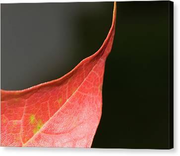 Canvas Print featuring the photograph Autumn 2 by Tara Lynn