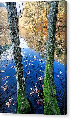Autumn - 7 Canvas Print by Okan YILMAZ