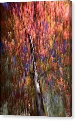 Autumn Abstract Canvas Print by Sue Cullumber