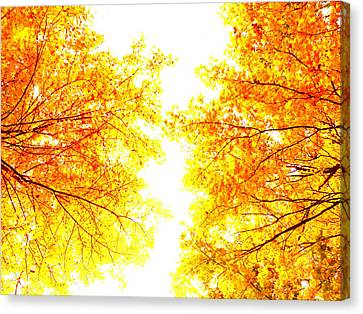 Autumn Abstract Canvas Print by Tim Good