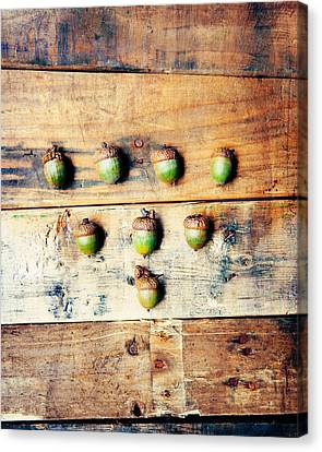 Autumn Acorns Canvas Print by Kim Fearheiley