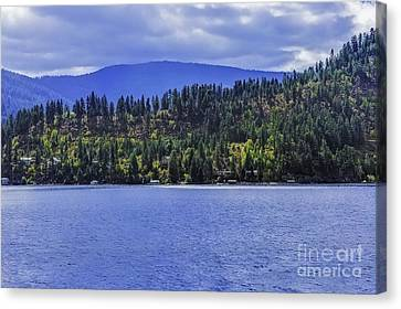Autumn Among The Pines Canvas Print