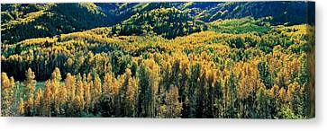 Autumn Aspens, Colorado, Usa Canvas Print by Panoramic Images