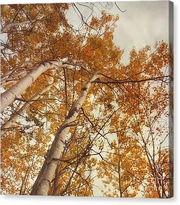 Autumn Aspens Canvas Print by Priska Wettstein