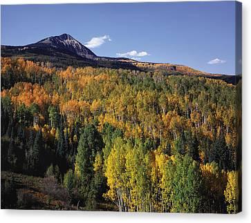 Autumn At Big Baldy Canvas Print