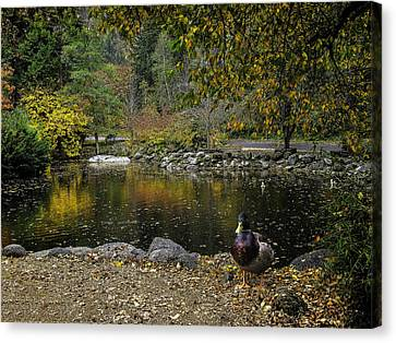 Autumn At Lithia Park Pond Canvas Print by Diane Schuster