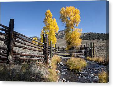 Canvas Print featuring the photograph Autumn At The Lamar Buffalo Ranch by Jack Bell