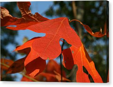 Autumn Attention Canvas Print by Neal Eslinger