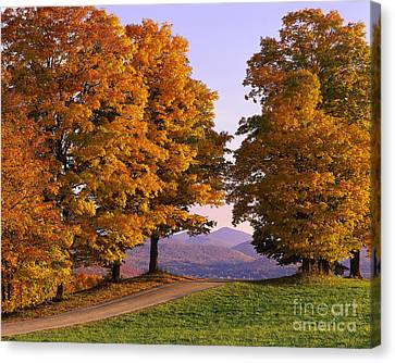 Autumn Backroad View Canvas Print