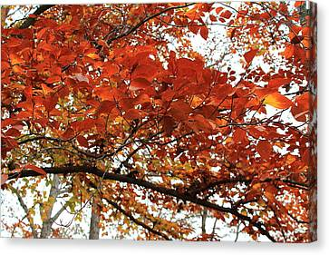 Canvas Print featuring the photograph Autumn Beauty by Candice Trimble