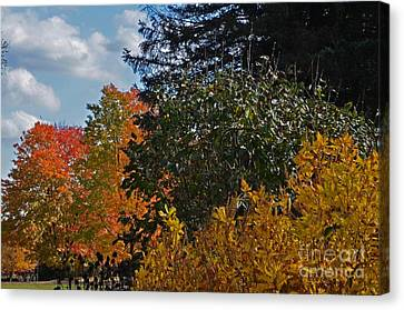 Canvas Print featuring the photograph Autumn Beauty by Judy Wolinsky