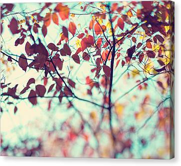 Autumn Beauty Canvas Print by Kim Fearheiley