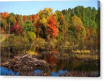 Autumn Beaver Pond Reflections Canvas Print by Georgia Mizuleva