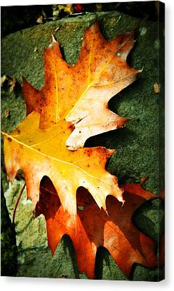 Autumn Blaze Canvas Print by JAMART Photography