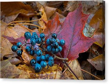 Autumn Blues Canvas Print by Bill Pevlor