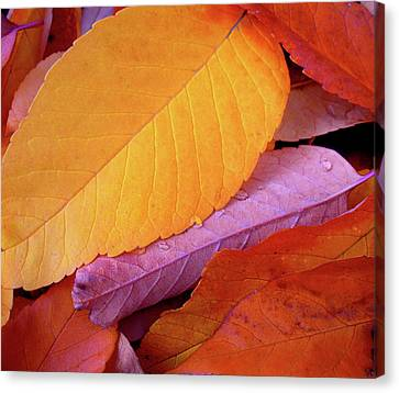 Autumn Bright Canvas Print by The Forests Edge Photography - Diane Sandoval